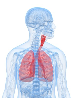 Breathing fellrnr running tips a 3d model showing the size and position of the lungs ccuart Choice Image