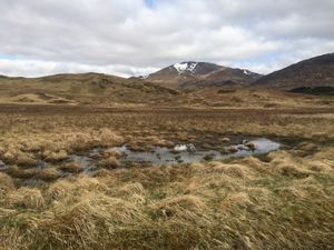 West Highland Way 1177.JPG