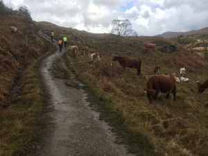 West Highland Way 1020.JPG